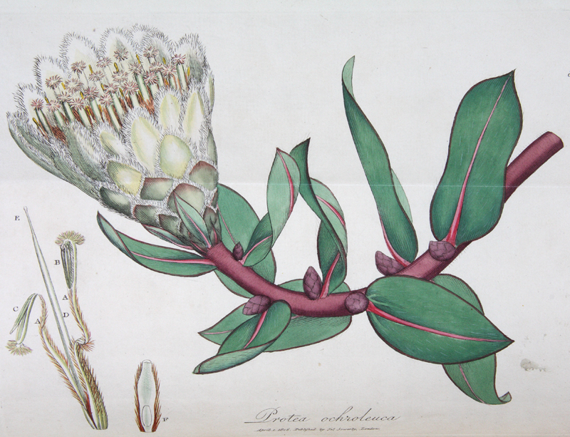 Exotic Botany: consisting of coloured figures, and scientific descriptions of such new,...