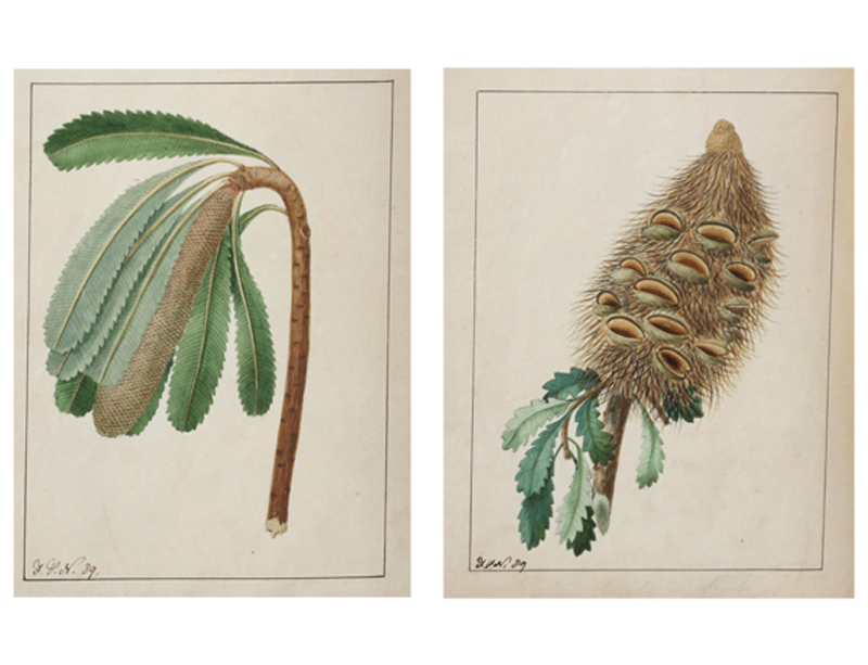 "A volume combining ""Zoology of New Holland"", with ""A Specimen of the Botany of New Holland. The..."