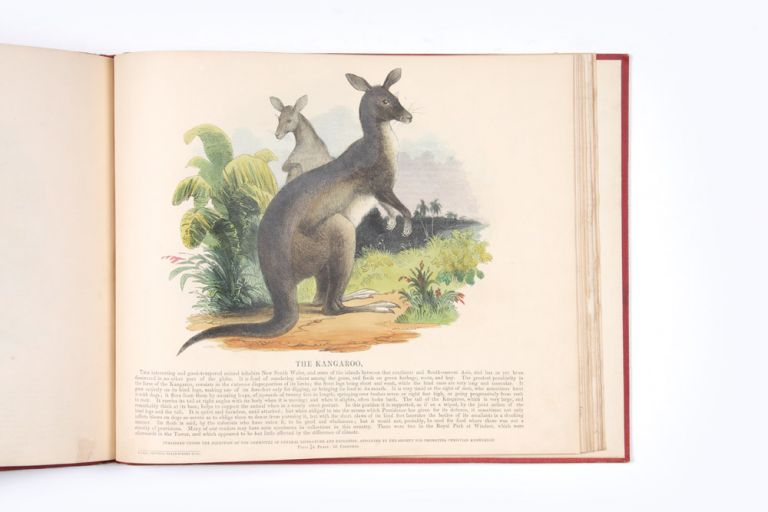 Bound volume of coloured separately-issued prints, including the Australian kangaroo and emu. EDUCATIONAL MENAGERIE.