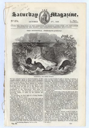 """The Duck-Bill, (Ornithorhynchus paradoxurus)"" [in], 1836. PLATYPUS, SATURDAY MAGAZINE."