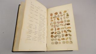 Index Testaceologicus; or A Catalogue of Shells, British and Foreign…