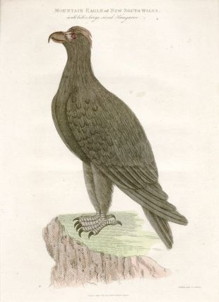Mountain Eagle of New South Wales. THOMAS WATLING, Edward DAYES