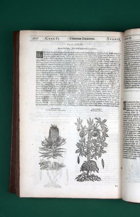 Theatrum Botanicum, The Theater of Plants. Or An Universall and Compleat Herball…