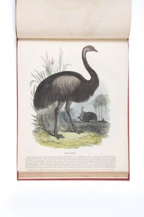 Bound volume of coloured separately-issued prints, including the Australian kangaroo and emu.