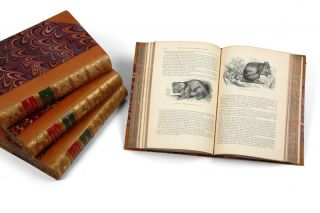 The Illustrated Natural History: Mammalia: Birds: Reptiles Etc: The Natural History of Man. Africa.