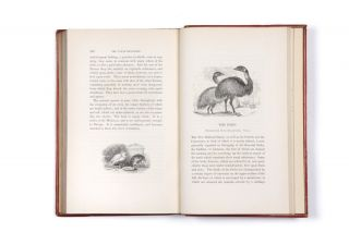 The Tower Menagerie: Comprising the Natural History of the Animals Contained in that Establishment; with Anecdotes of their Characters and History…illustrated...