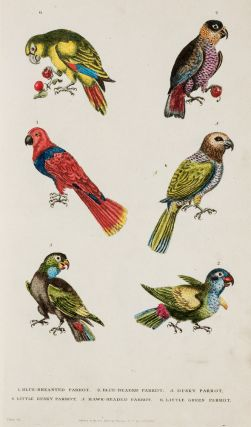A New Dictionary of Natural History; or, Compleat Universal Display or Animated Nature. With Accurate Representations of the Most Curious and Beautiful Animals, Elegantly Coloured.