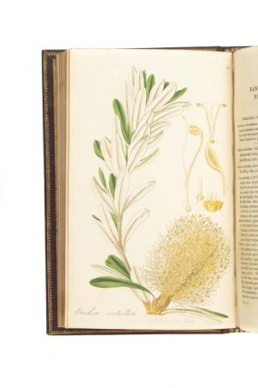 Exotic Flora, containing figures and descriptions of new, rare, or otherwise interesting exotic plants, especially of such as are deserving of being cultivated in our gardens; together with remarks upon their generic and specific characters, natural orders, history, culture, time of flowering, &c.
