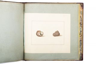The Universal Conchologist, exhibiting the figure of every known shell, accurately drawn and painted after nature…